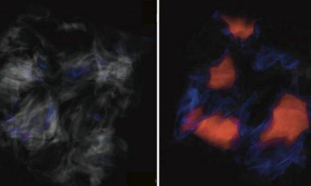 Caos 'magnetico' nelle nursery stellari