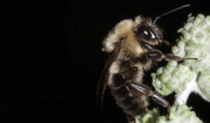 Eclissi solare, le api incrociano le braccia
