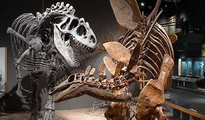 I dinosauri sono morti di freddo?