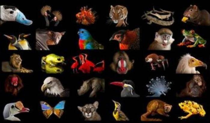Tutela delle biodiversità, al via Photo Ark