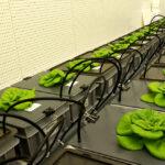 Agricoltura spaziale high tech per terrestri