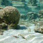 Ossigeno terrestre? È iniziato dal mare