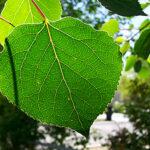 Marte, futuri sensori come foglie di un pioppo