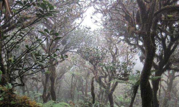Clima, in affanno le foreste nebulose