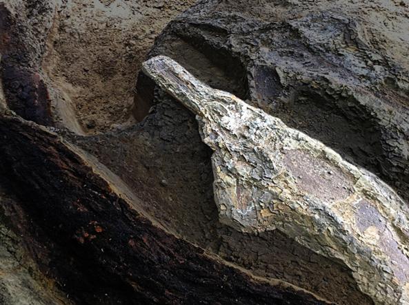 La firma dell'asteroide che ha spazzato via i dinosauri