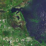 Cambiamenti climatici, emergenza alga