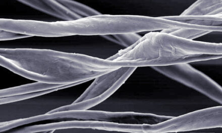 La seta, il materiale del futuro