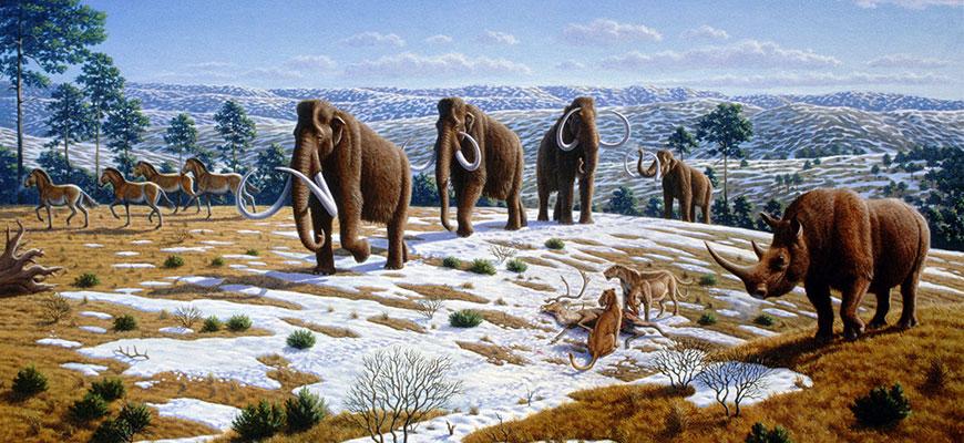 Come si sono estinti i mammut?