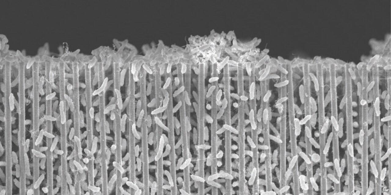 Nanostrutture per sopravvivere su Marte