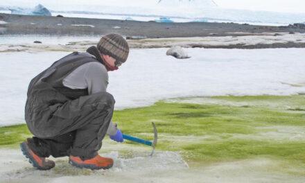 Neve verde in Antartide