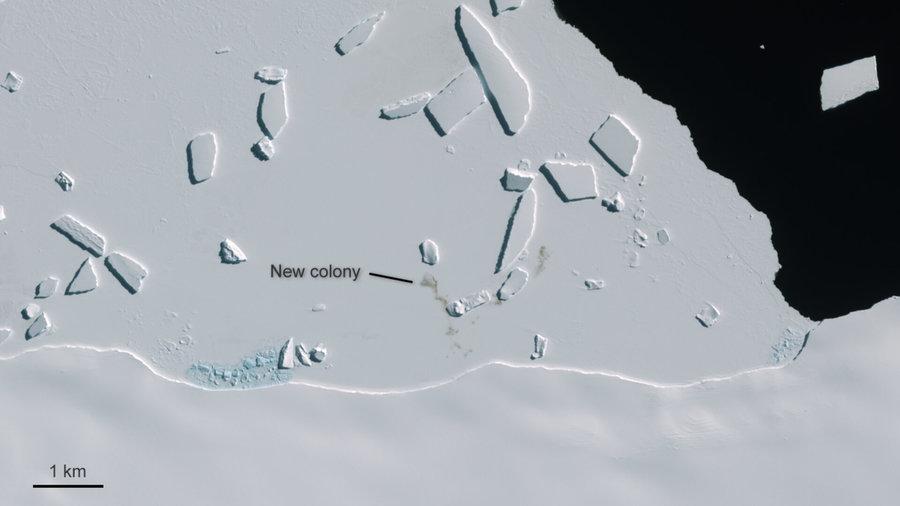 Una sentinella spaziale per i pinguini