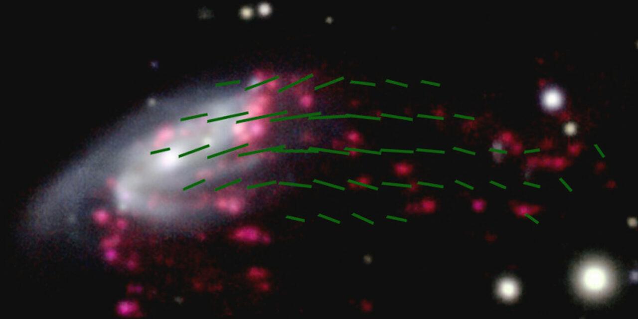 La galassia medusa dai tentacoli magnetici