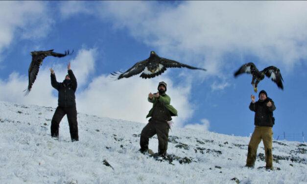 I cambiamenti climatici influenzano la vita della fauna artica